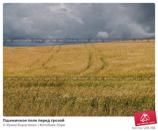 Пшеничное поле перед грозой, фото № 235106, снято 20 июня 2007 г. (c) Ирина Борсученко / Фотобанк Лори