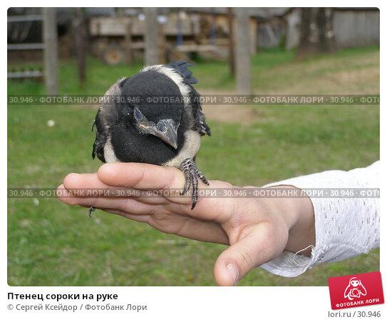 Птенец сороки на руке, фото № 30946, снято 26 мая 2006 г. (c) Сергей Ксейдор / Фотобанк Лори