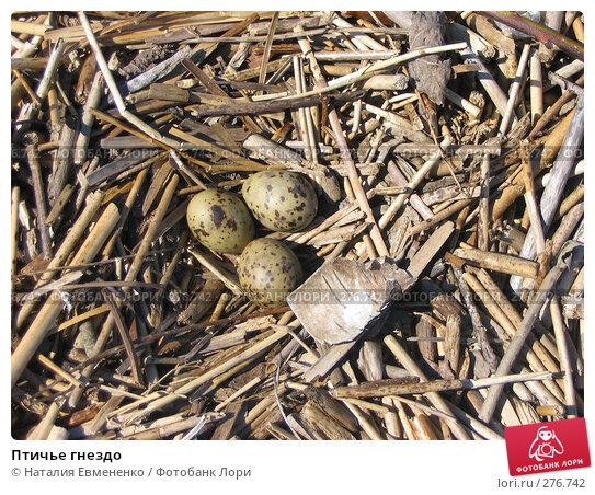 Птичье гнездо, фото № 276742, снято 10 июня 2005 г. (c) Наталия Евмененко / Фотобанк Лори