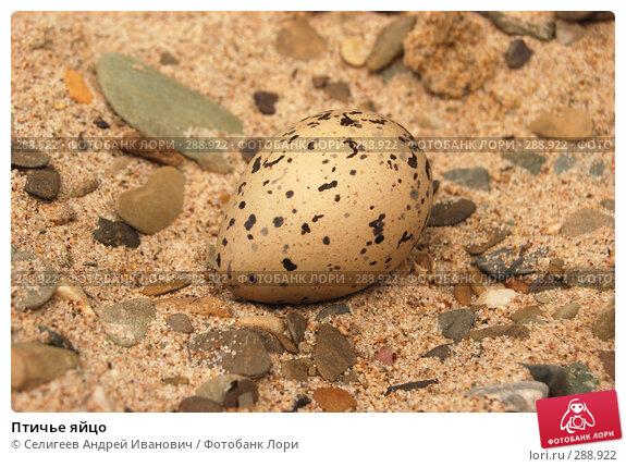 Птичье яйцо, фото № 288922, снято 12 июня 2007 г. (c) Селигеев Андрей Иванович / Фотобанк Лори
