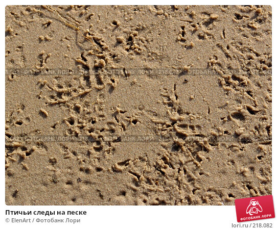Купить «Птичьи следы на песке», фото № 218082, снято 25 ноября 2017 г. (c) ElenArt / Фотобанк Лори