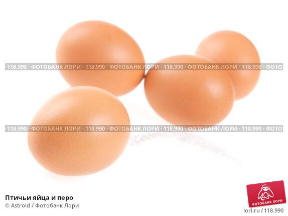 Купить «Птичьи яйца и перо», фото № 118990, снято 5 января 2007 г. (c) Astroid / Фотобанк Лори