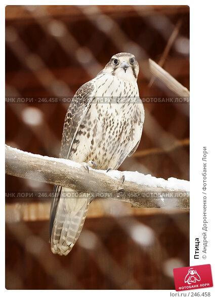 Птица, фото № 246458, снято 25 марта 2017 г. (c) Андрей Доронченко / Фотобанк Лори