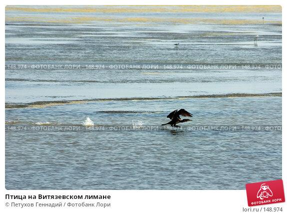 Птица на Витязевском лимане, фото № 148974, снято 9 августа 2007 г. (c) Петухов Геннадий / Фотобанк Лори