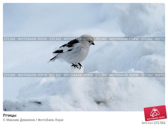 Птицы, фото № 272562, снято 4 мая 2008 г. (c) Максим Деминов / Фотобанк Лори