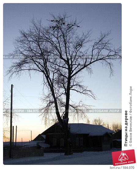 Птицы на дереве, фото № 184070, снято 2 января 2008 г. (c) Бяков Вячеслав / Фотобанк Лори