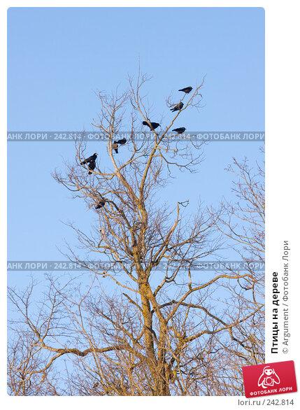 Птицы на дереве, фото № 242814, снято 29 марта 2008 г. (c) Argument / Фотобанк Лори
