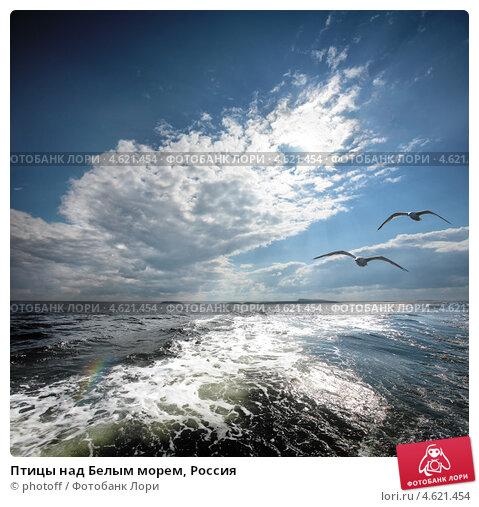 Птицы над Белым морем, Россия. Стоковое фото, фотограф photoff / Фотобанк Лори