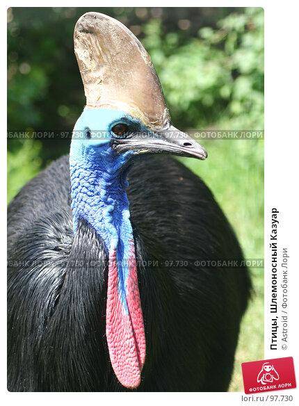 Купить «Птицы, Шлемоносный Казуар», фото № 97730, снято 24 июня 2005 г. (c) Astroid / Фотобанк Лори