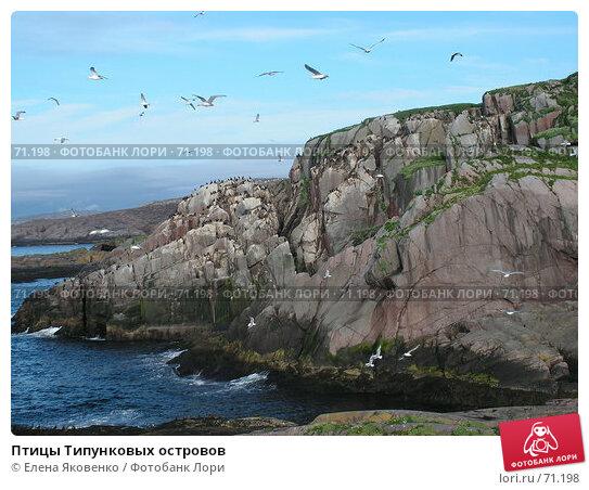 Птицы Типунковых островов, фото № 71198, снято 19 ноября 2006 г. (c) Елена Яковенко / Фотобанк Лори