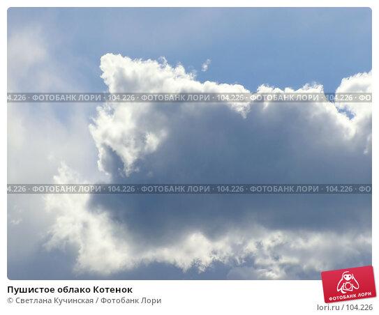 Пушистое облако Котенок, фото № 104226, снято 25 октября 2016 г. (c) Светлана Кучинская / Фотобанк Лори