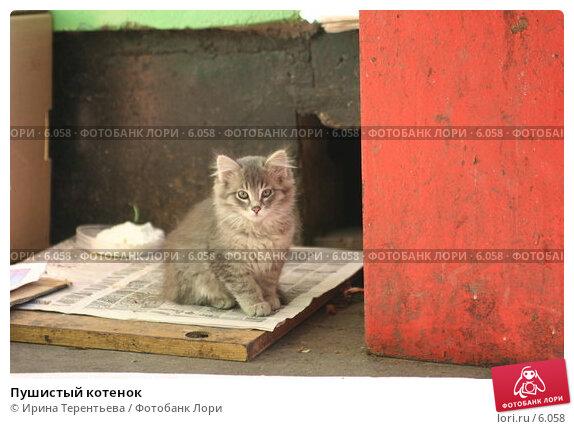 Пушистый котенок, эксклюзивное фото № 6058, снято 4 июня 2005 г. (c) Ирина Терентьева / Фотобанк Лори