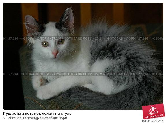 Пушистый котенок лежит на стуле, фото № 27214, снято 24 июня 2006 г. (c) Сайганов Александр / Фотобанк Лори
