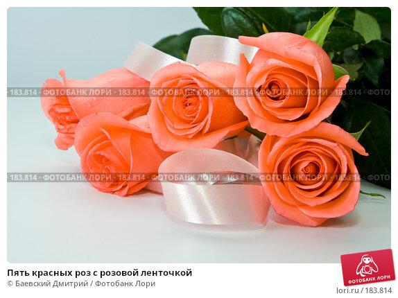 Купить «Пять красных роз с розовой ленточкой», фото № 183814, снято 24 апреля 2018 г. (c) Баевский Дмитрий / Фотобанк Лори