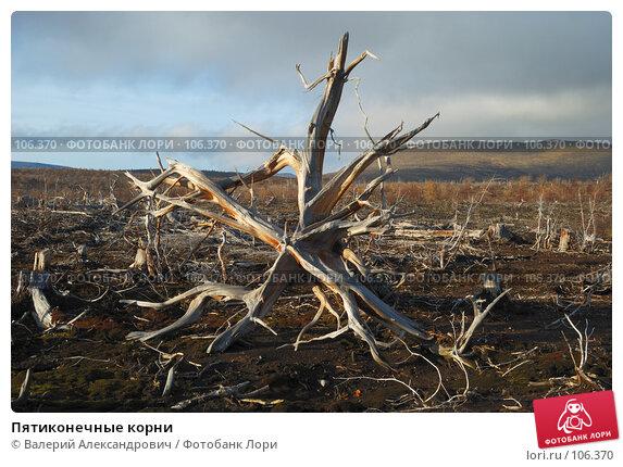 Пятиконечные корни, фото № 106370, снято 6 октября 2007 г. (c) Валерий Александрович / Фотобанк Лори