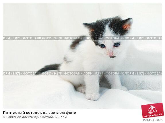 Пятнистый котенок на светлом фоне, фото № 9878, снято 17 января 2005 г. (c) Сайганов Александр / Фотобанк Лори