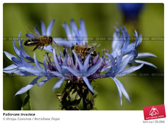 Рабочие пчелки, фото № 35094, снято 21 сентября 2017 г. (c) Игорь Соколов / Фотобанк Лори