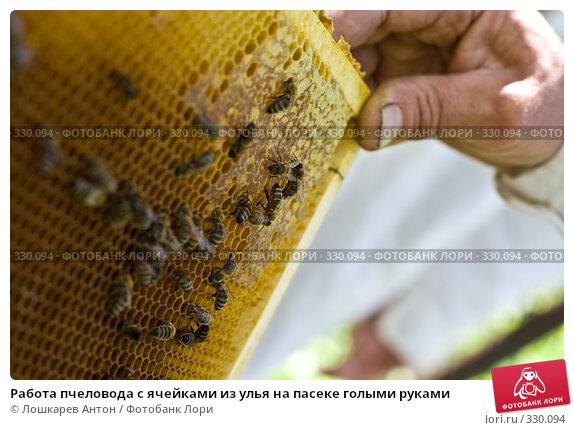 Работа пчеловода с ячейками из улья на пасеке голыми руками, фото № 330094, снято 21 июля 2017 г. (c) Лошкарев Антон / Фотобанк Лори