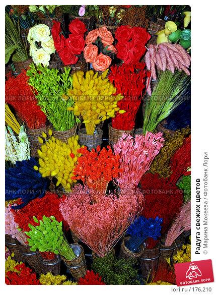 Радуга свежих цветов, фото № 176210, снято 15 апреля 2006 г. (c) Марина Мокеева / Фотобанк Лори