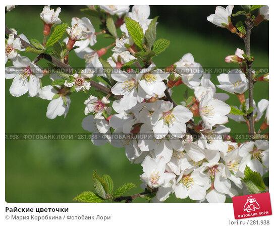 Райские цветочки, фото № 281938, снято 26 апреля 2008 г. (c) Мария Коробкина / Фотобанк Лори