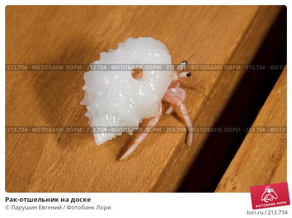 Купить «Рак-отшельник на доске», фото № 213734, снято 20 апреля 2018 г. (c) Парушин Евгений / Фотобанк Лори