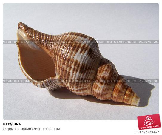 Ракушка, фото № 259678, снято 19 апреля 2008 г. (c) Дима Рогожин / Фотобанк Лори