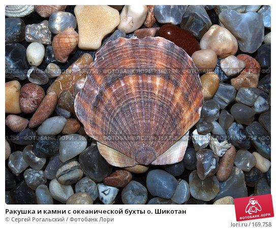 Ракушка и камни с океанической бухты о. Шикотан, фото № 169758, снято 24 октября 2016 г. (c) Сергей Рогальский / Фотобанк Лори