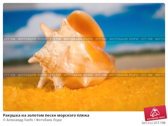 Ракушка на золотом песке морского пляжа, фото № 217198, снято 24 июля 2017 г. (c) Александр Fanfo / Фотобанк Лори
