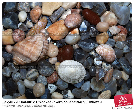 Ракушки и камни с тихоокеанского побережья о. Шикотан, фото № 169030, снято 26 июня 2017 г. (c) Сергей Рогальский / Фотобанк Лори