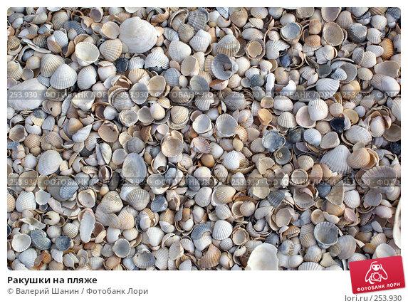 Ракушки на пляже, фото № 253930, снято 26 сентября 2007 г. (c) Валерий Шанин / Фотобанк Лори