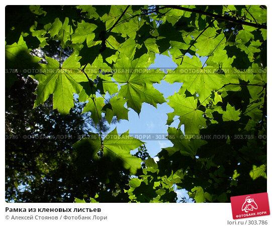 Рамка из кленовых листьев, фото № 303786, снято 11 августа 2004 г. (c) Алексей Стоянов / Фотобанк Лори