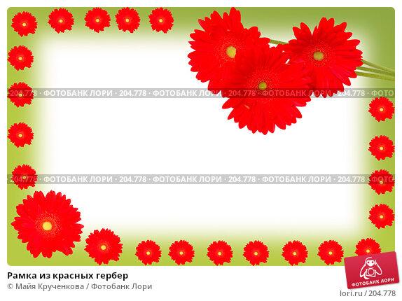 Купить «Рамка из красных гербер», фото № 204778, снято 17 февраля 2008 г. (c) Майя Крученкова / Фотобанк Лори