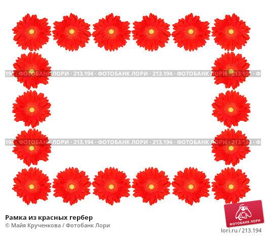 Рамка из красных гербер, фото № 213194, снято 17 февраля 2008 г. (c) Майя Крученкова / Фотобанк Лори
