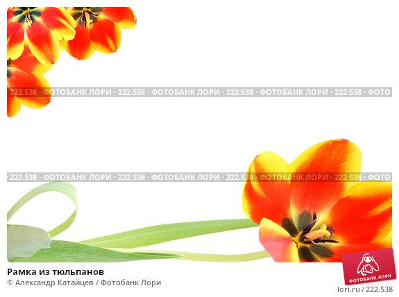 Рамка из тюльпанов, фото № 222538, снято 1 марта 2008 г. (c) Александр Катайцев / Фотобанк Лори