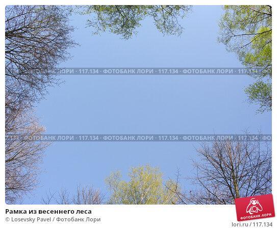 Купить «Рамка из весеннего леса», фото № 117134, снято 7 мая 2006 г. (c) Losevsky Pavel / Фотобанк Лори