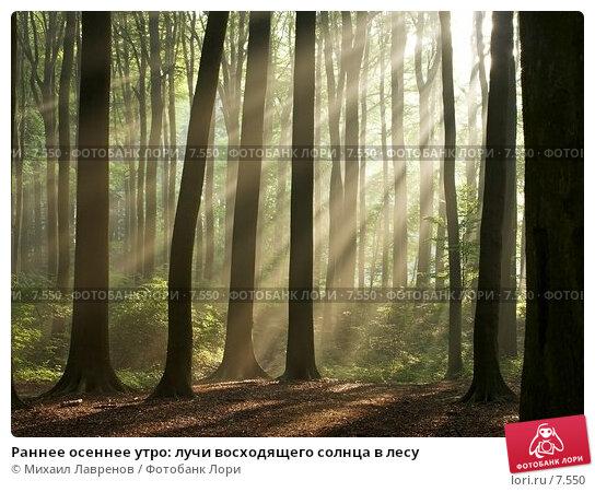 Раннее осеннее утро: лучи восходящего солнца в лесу, фото № 7550, снято 27 февраля 2017 г. (c) Михаил Лавренов / Фотобанк Лори