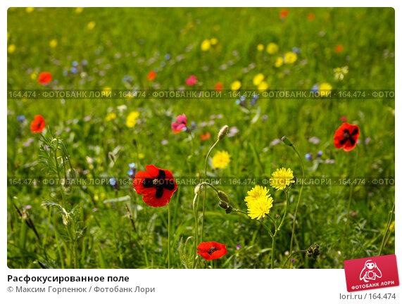 Расфокусированное поле, фото № 164474, снято 6 мая 2006 г. (c) Максим Горпенюк / Фотобанк Лори