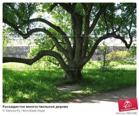 Раскидистое многоствольное дерево, фото № 303938, снято 24 мая 2008 г. (c) Заноза-Ру / Фотобанк Лори