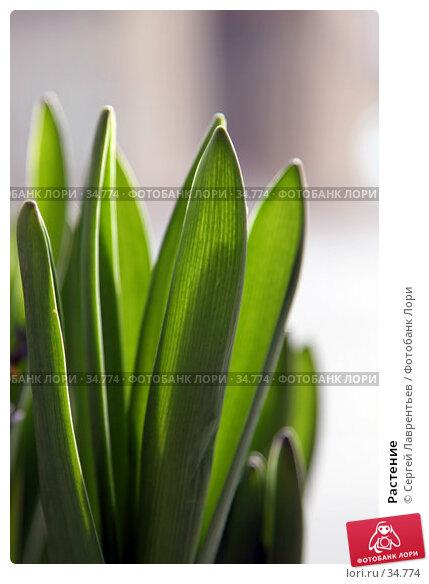Растение, фото № 34774, снято 22 апреля 2007 г. (c) Сергей Лаврентьев / Фотобанк Лори