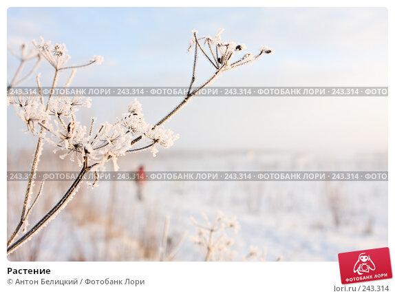 Растение, фото № 243314, снято 11 февраля 2008 г. (c) Антон Белицкий / Фотобанк Лори
