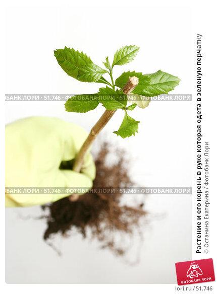 Купить «Растение и его корень в руке которая одета в зеленую перчатку», фото № 51746, снято 15 марта 2007 г. (c) Останина Екатерина / Фотобанк Лори