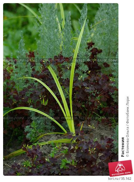 Растения, фото № 35162, снято 8 июля 2006 г. (c) Блинова Ольга / Фотобанк Лори