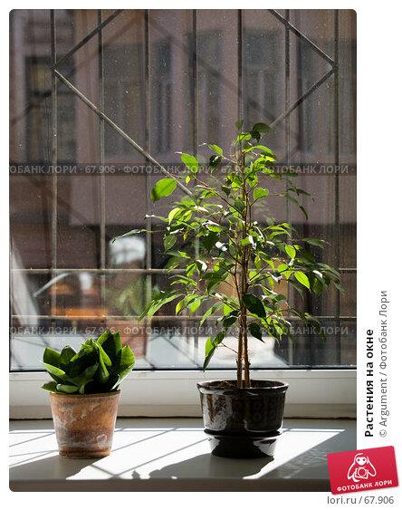 Растения на окне, фото № 67906, снято 16 апреля 2007 г. (c) Argument / Фотобанк Лори