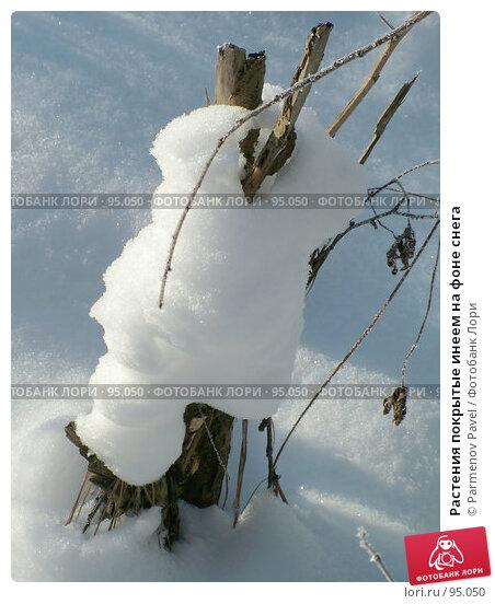Растения покрытые инеем на фоне снега, фото № 95050, снято 12 февраля 2007 г. (c) Parmenov Pavel / Фотобанк Лори