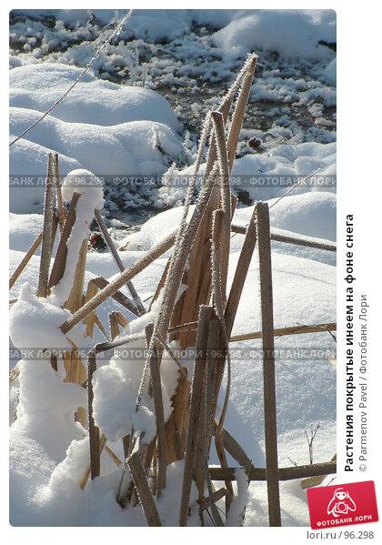 Растения покрытые инеем на фоне снега, фото № 96298, снято 12 февраля 2007 г. (c) Parmenov Pavel / Фотобанк Лори