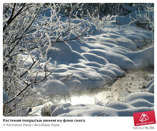 Растения покрытые инеем на фоне снега, фото № 96306, снято 12 февраля 2007 г. (c) Parmenov Pavel / Фотобанк Лори