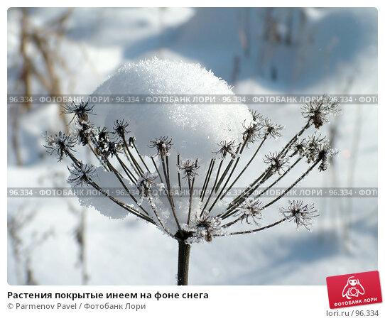 Купить «Растения покрытые инеем на фоне снега», фото № 96334, снято 12 февраля 2007 г. (c) Parmenov Pavel / Фотобанк Лори