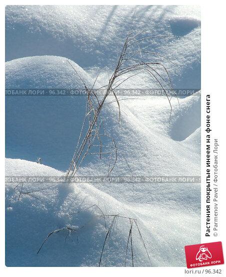 Растения покрытые инеем на фоне снега, фото № 96342, снято 12 февраля 2007 г. (c) Parmenov Pavel / Фотобанк Лори
