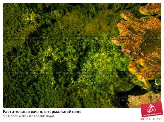 Растительная жизнь в термальной воде, фото № 31738, снято 7 января 2007 г. (c) Eleanor Wilks / Фотобанк Лори