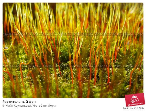 Растительный фон, фото № 219986, снято 25 марта 2007 г. (c) Майя Крученкова / Фотобанк Лори